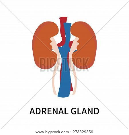 Adrenal Gland Icon Isolated On White Background. Adrenal Gland Icon Simple Sign. Adrenal Gland Icon