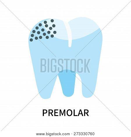 Premolar Icon Isolated On White Background. Premolar Icon Simple Sign. Premolar Icon Trendy And Mode
