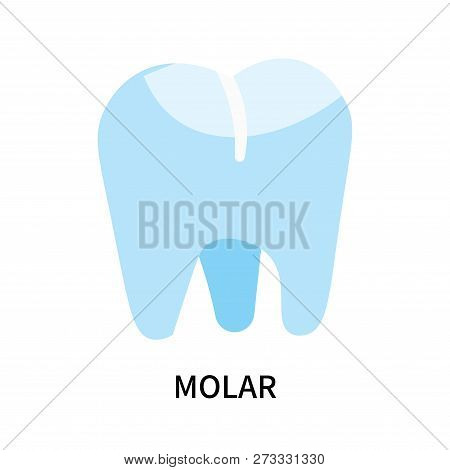 Molar Icon Isolated On White Background. Molar Icon Simple Sign. Molar Icon Trendy And Modern Symbol