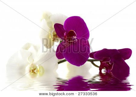 Beautiful fresh orchids
