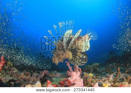 Lionfish fish on coral reef