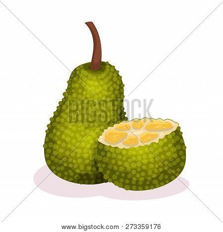 Whole And Half Of Jackfruit. Juicy Tropical Fruit. Exotic Food. Vegetarian Nutrition. Detailed Flat