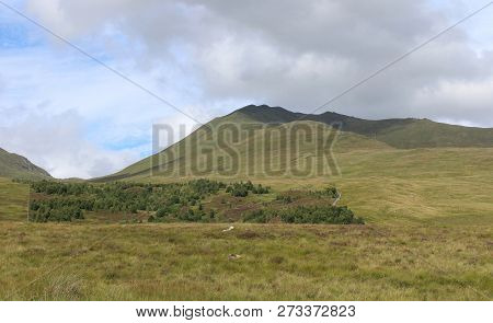 View of Ben Lawers National Nature Reserve, and the Edramucky Trail clearly showing an area of regenerated native vegetation. poster