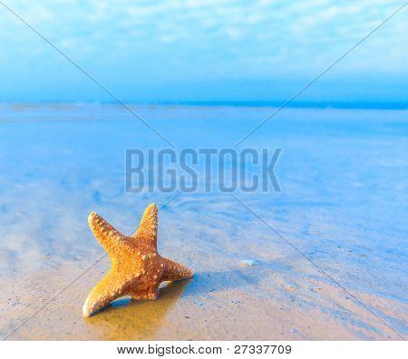 Detail Star Shore