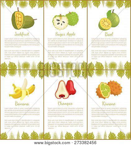 Jackfruit And Sugar Apple, Bael And Banana, Champoo And Kiwano Tropical Posters Set With Exotic Frui