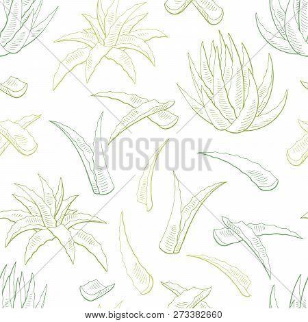 Aloe Vera Graphic Color Seamless Pattern Background Sketch Illustration Vector