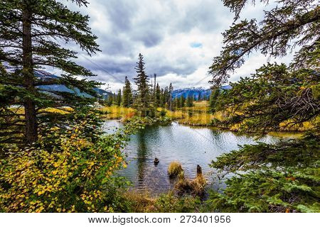 Fabulous beauty landscape. The lakes, yellow autumn grass and firs of Canada. Autumn wind drives ripples in the dark water. Concept of photo-tourism and active tourism