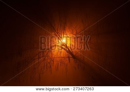 Mysterious Silhouette Of Backlit Naked Tree In Dense Fog At Night In The Winter With Radiant Orange