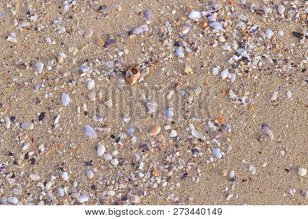 Surface Of Yellow Sea Sand. A Lot Of Colorful Little Seashells On The Sea Sand. Fragments Of White,