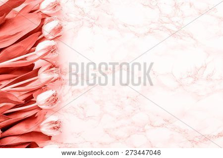 Pink Tulips On White Marble Background. Spring And Celebration Concept. Copy Space . Living Coral Th