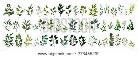 Collection Of Greenery Leaf Plant Forest Herbs Tropical Leaves Spring Flora In Watercolor Style. Vec
