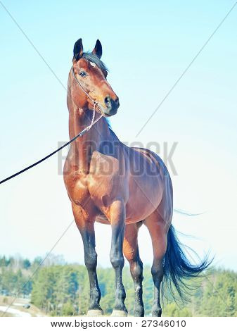 bay  horse in field