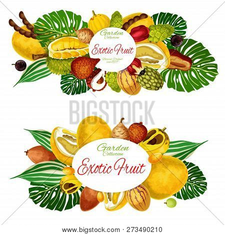 Exotic Tropic Vector Fruits Tamarind, Jackfruit Or Pomelo And Quince Pear. Tropical Fruit Agricultur