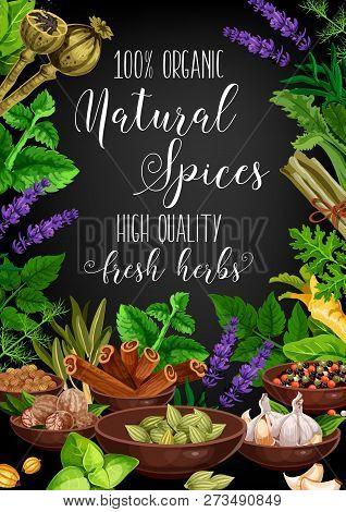 Herbs And Spices Garlic, Basil Or Rosemary And Parsley. Vector Culinary Cooking Seasoning, Organic F
