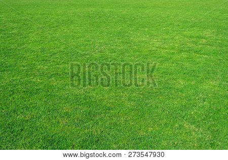 Background Of Green Grass Field. Green Grass Pattern And Texture. Green Lawn Background.