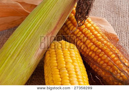 Colorful Corncobs
