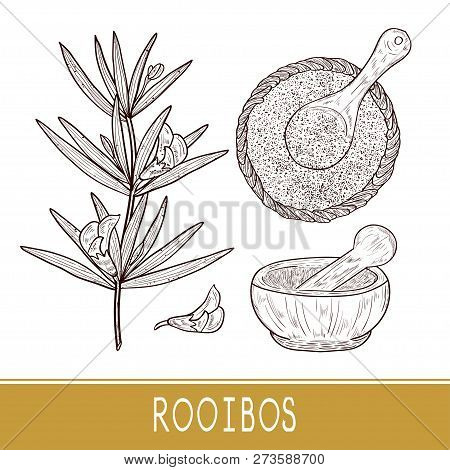 Rooibos. Leaves, Flower, Tea, Bowl, Spoon, Mortar. Sketch. Monophonic.