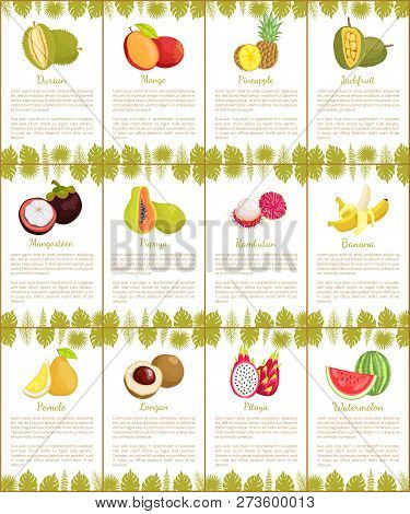 Durian And Mango Posters Set With Text Sample And Tropical Fruits Vector. Pineapple And Papaya, Ramb