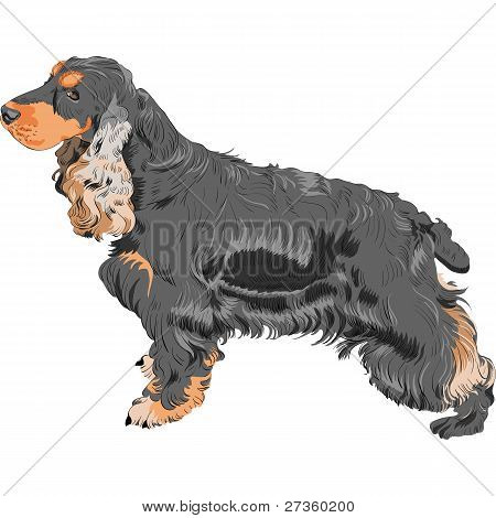 color sketch black English Cocker Spaniel breed isolated in white background poster
