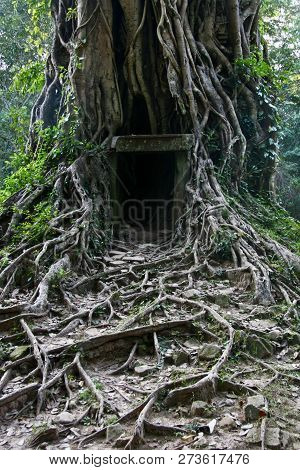 A Little Shelter In A Huge Old Banyan Trees Root System In The Cambodian Jungle