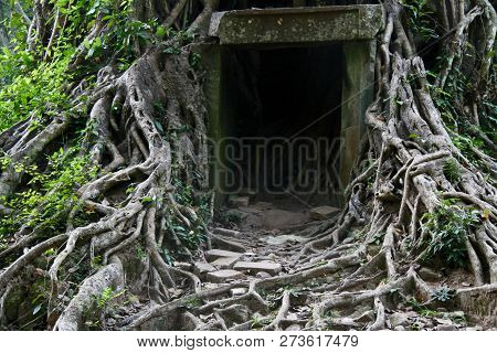 A Little Shelter Built Into A Banyan Trees Root System In Cambodia