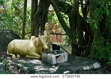A Golden Ox With Love Heart Carved Head Laying Beside A Golden Boy On A Jungle Shrine In Cambodia