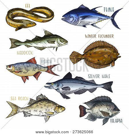 Signboards With Fish. Trophy Signs With Eel And Haddock, Winter Flounder And Silver Hake, Sea And Co