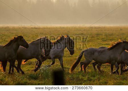 Herd Of Horses Grazing In A Meadow In The Mist. Horses In A Foggy Meadow In Autumn. Horses And Foggy