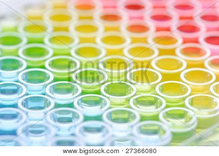 biomedical research: close up of Enzyme-linked Immunospot Assay plate