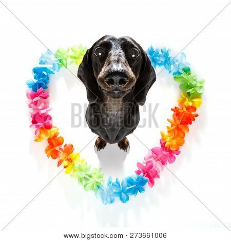 Sausage Dachshund  Dog In Love For Happy Valentines Day With Rainbow  Flower Chain In Heart Shape  ,