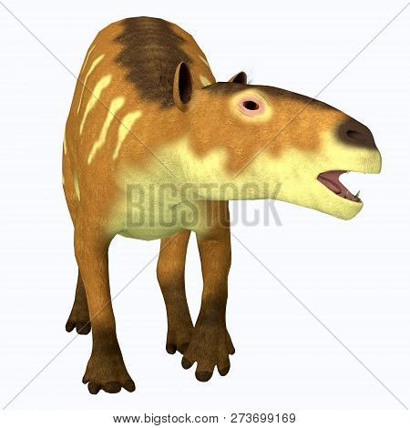Eurohippus Horse Front Profile 3d Illustration - Eurohippus Was An Early Horse That Lived In The Mid