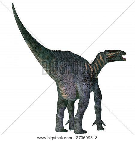 Iguanodon Dinosaur Tail 3d Illustration - Iguanodon Was A Herbivorous Ornithopod Dinosaur That Lived