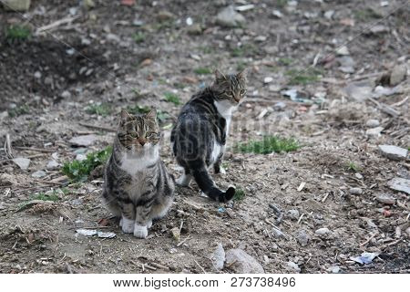 The Two Lonely Babe Cats On The Farm