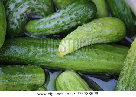 Whole Cucumbers And Ceramic Bowl In Soft Focus In Background.