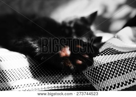 Paw With Pads Close-up Against The Backdrop Of A Sleeping Cat On The Wicker Blanket. One Color Detai