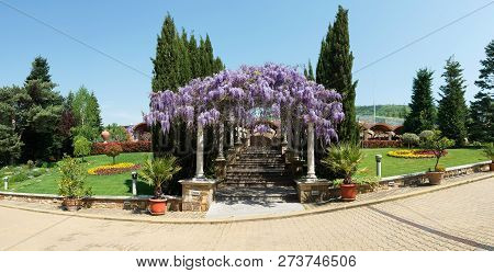 Arched Constructionr Covered With Colorful Lilac Purple Drooping Wisteria Flowers Over A Stairs Path