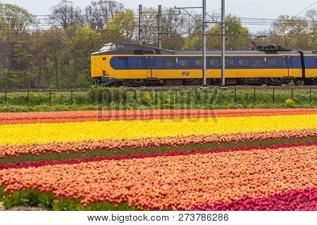 Zuid Holland, The Netherlands - 23 April 2017: Dutch Electric Train Passing Through Typical Dutch Sp