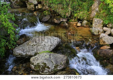 small mountain brook in green forest