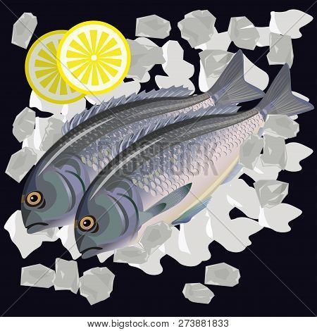 Two Fresh Raw Fishes Gilt Head Bream Or Dorada With Lemon Lie On Ice. Vector Illustration