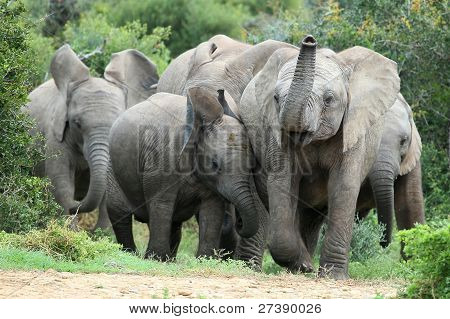 African Elephant Friends