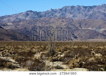 Cholla And Ocotillo Cactus Besides The Creosote Plant Taken On A Rural Arid Valley Surrounded By Mou