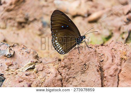 A Butterfly Is On Wet Soil.