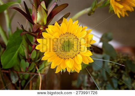 Color Photograph Of A Bouquet Of Sunflowers Inside A Home