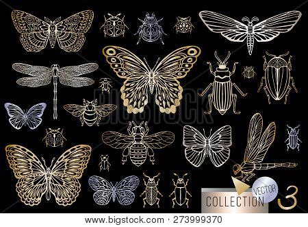 Big Hand Drawn Golden Line Set Of Insects Bugs, Beetles, Honey Bees, Butterfly, Moth, Bumblebee, Was