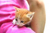 Nice little kitten on the girl's back. poster