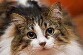 Cat Musja 03