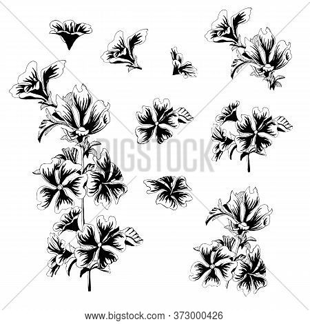 Vector Flowers Malva Sylvestris. A Set Of Floral Elements Drawn By Ink. Black And White Vector Illus
