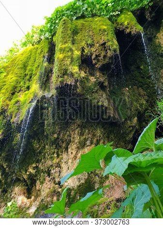 Pietrele Vorbitoare Waterfalls, Lush Green Vegetation Growing On Limestone Wall. Travertine Waterfal