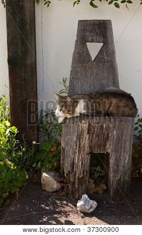 cat relaxing on wooden chair on the house yard poster