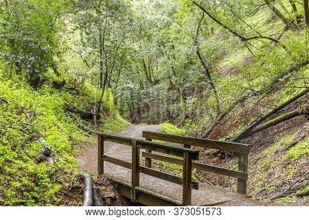 Creek-crossing Footbridge In Lush Bay Laurel Forest Canyon. Rancho San Antonio Open Space Preserve,